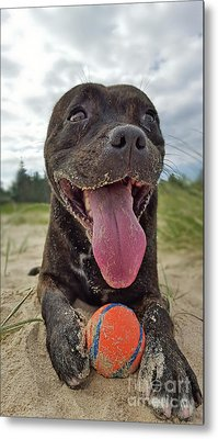 Metal Print featuring the photograph Beach Dog - More Play? By Kaye Menner by Kaye Menner