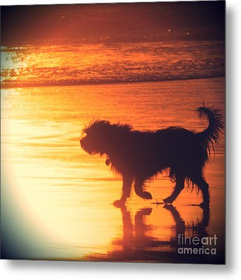Beach Dog Metal Print by Paul Topp