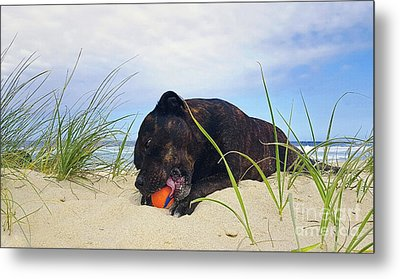 Metal Print featuring the photograph Beach Dog - Rest Time By Kaye Menner by Kaye Menner