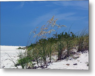 Beach Grass 3 Metal Print by Evelyn Patrick