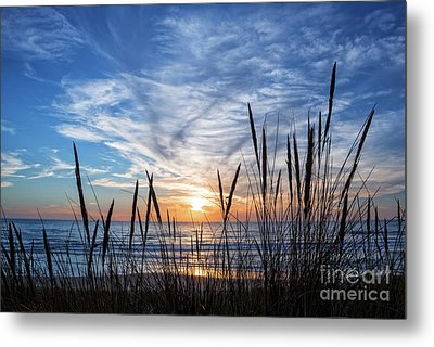 Metal Print featuring the photograph Beach Grass by Delphimages Photo Creations