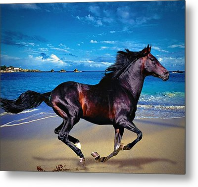 Metal Print featuring the photograph Beach Horse by Robert Smith