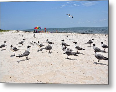 Metal Print featuring the photograph Beach Party by Jan Amiss Photography