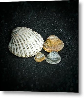 Metal Print featuring the photograph Beach Treasures  by Karen Stahlros