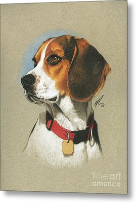 Beagle Metal Print by Marshall Robinson