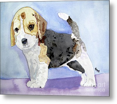 Beagle Pup Metal Print by Sandy McIntire