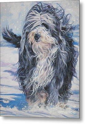 Bearded Collie In Snow Metal Print by Lee Ann Shepard