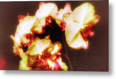 Metal Print featuring the photograph Beautiful Orchid by Isabella F Abbie Shores FRSA