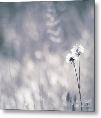 Metal Print featuring the photograph Beaute Des Champs - 0101 by Variance Collections