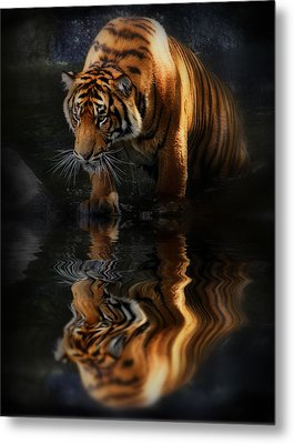 Beautiful Animal Metal Print by Kym Clarke