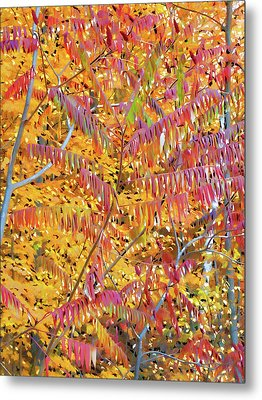 Beautiful Autumn Tree Metal Print