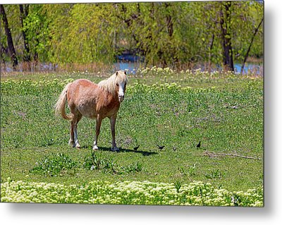Beautiful Blond Horse And Four Little Birdies Metal Print by James BO Insogna