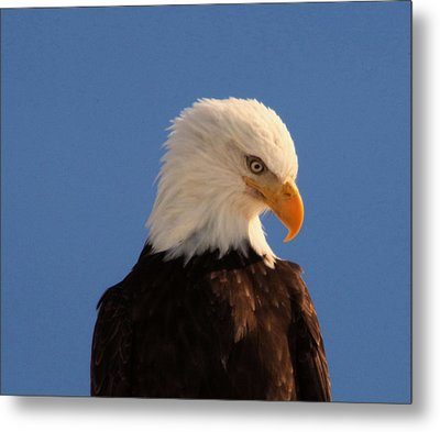 Metal Print featuring the photograph Beautiful Eagle by Jeff Swan
