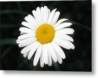 Metal Print featuring the photograph Beautiful Flower by Milena Ilieva