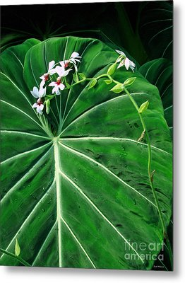 Beautiful Ivory Veins Of A Philodendron Metal Print by Sue Melvin