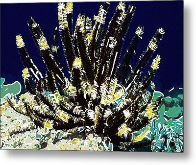Beautiful Marine Plants 10 Metal Print by Lanjee Chee