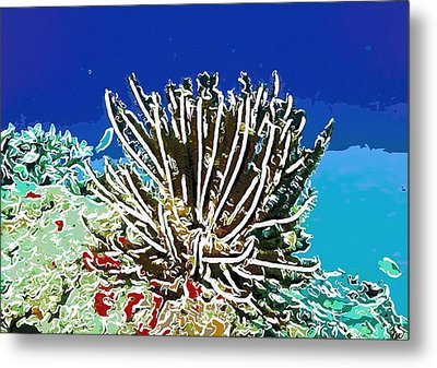 Beautiful Marine Plants 11 Metal Print by Lanjee Chee