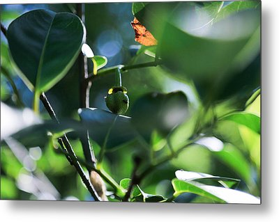 Beautiful Nature Metal Print by Christopher L Thomley