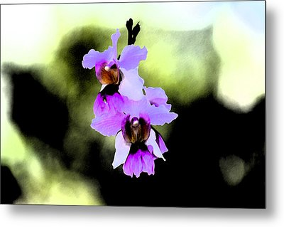 Beautiful Orchid Metal Print by Nanette Hert