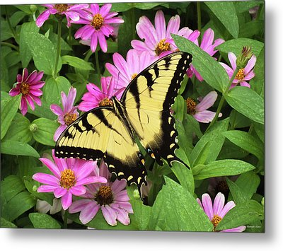 Beautiful Summer Metal Print
