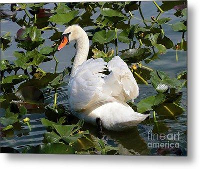 Beautiful Swan In The Lilies Metal Print by Carol Groenen