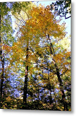 Beautiful Trees In The Forest 11 Metal Print by Lanjee Chee