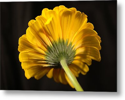Metal Print featuring the photograph Beautiful Underside by Jeff Swan