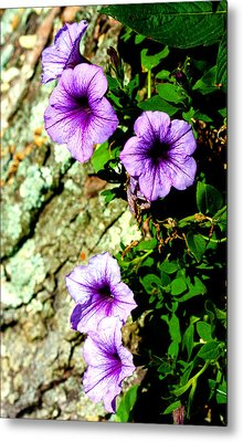 Beautiful Violets Metal Print