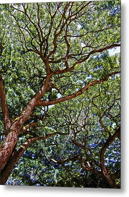 Beautiful Waimea Trees Metal Print