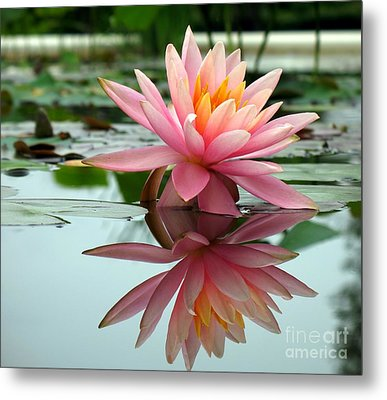 Beautiful Water Lily In A Pond Metal Print by Yali Shi