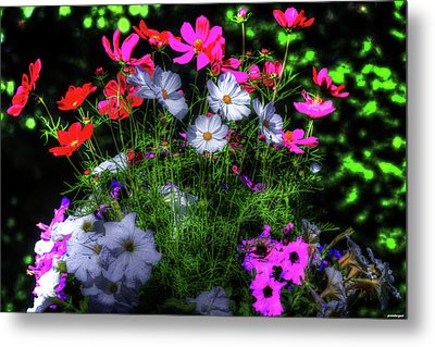 Metal Print featuring the photograph Beauty II by Tom Prendergast