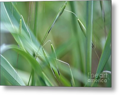 Beauty In Simplicity Metal Print by Sheila Ping