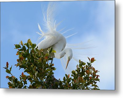 Metal Print featuring the photograph Beauty In The Treetop by Fraida Gutovich