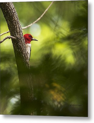 Beauty In The Woods Metal Print
