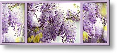 Beauty Of Wisteria. Purple. Triptych Metal Print by Jenny Rainbow