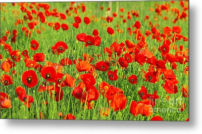 Beauty Red Poppies Metal Print by Boon Mee