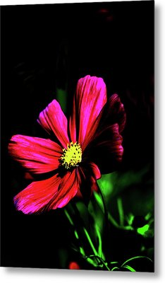 Metal Print featuring the photograph Beauty  by Tom Prendergast
