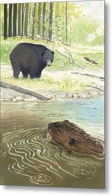 Beaver Metal Print by Denny Bond