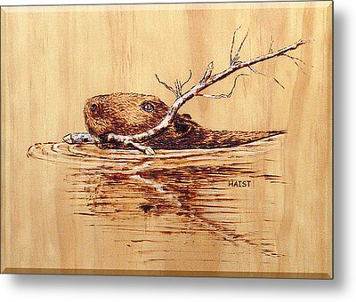 Metal Print featuring the pyrography Beaver by Ron Haist