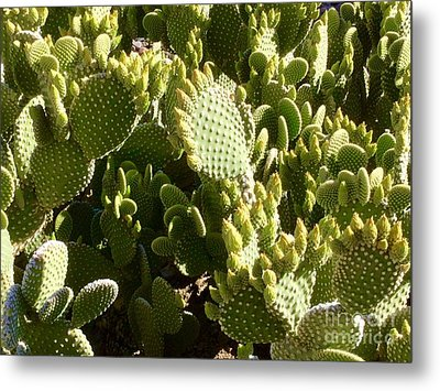 Beaver Tail Cactus, Cave Creek, Arizona Metal Print by Patricia E Sundik