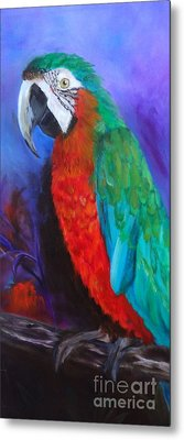 Becky The Macaw Metal Print