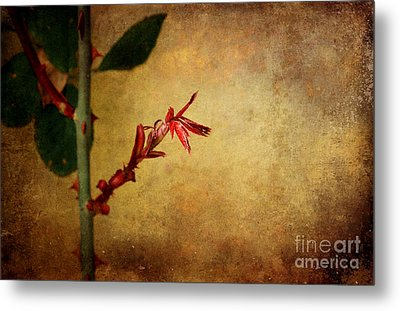 Becomes The Rose Metal Print by Ellen Cotton