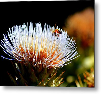 Bee And Artichoke Metal Print