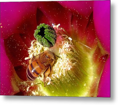 Bee At Work Metal Print by Feva  Fotos