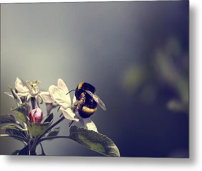 Bee Happy Metal Print by Gabriel Calahorra