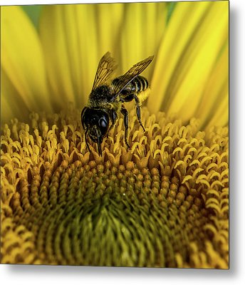 Metal Print featuring the photograph Bee In A Sunflower by Paul Freidlund