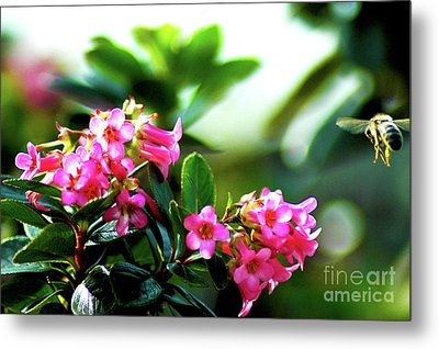 Metal Print featuring the photograph Bee In Flight by Micah May