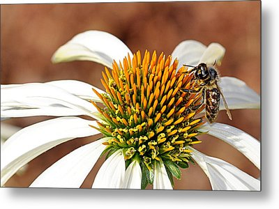 Metal Print featuring the photograph Bee In The Echinacea  by AJ Schibig