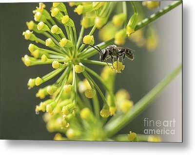Bee Metal Print by Jivko Nakev