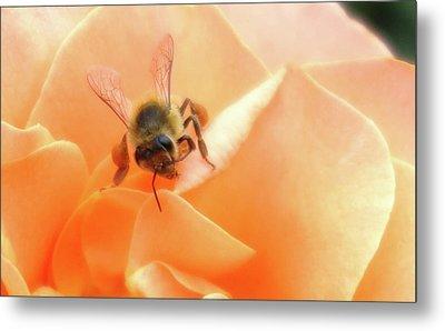 Bee On Flower Metal Print by Matthew Bamberg
